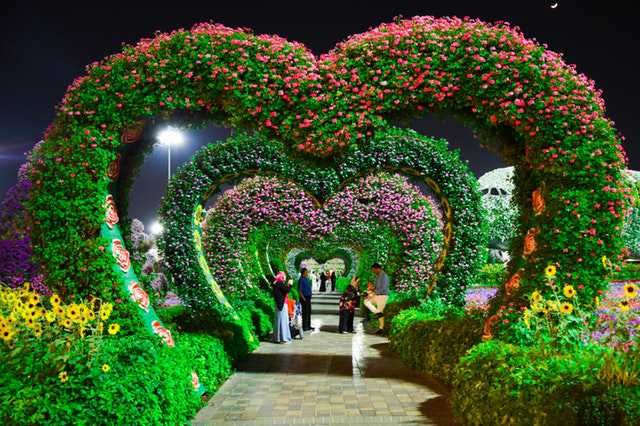 heart-shaped-pink-and-purple-flower-garden image