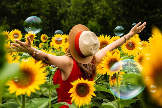 woman-wearing-straw-hat-standing-in-bed-of-sunflowers img