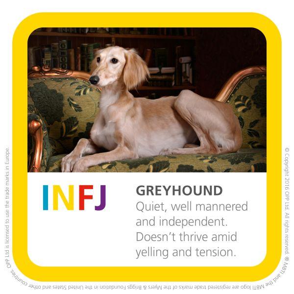 INFJ greyhound dog image