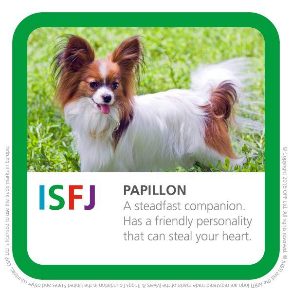 ISFJ papillon dog pic