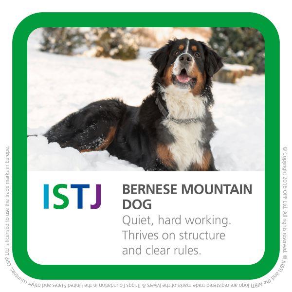 ISTJ - Bernese Mountain dog pic