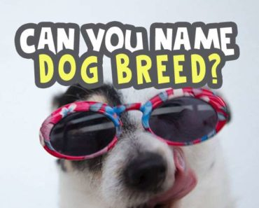 can-you-name-the-dog-breed-quiz image