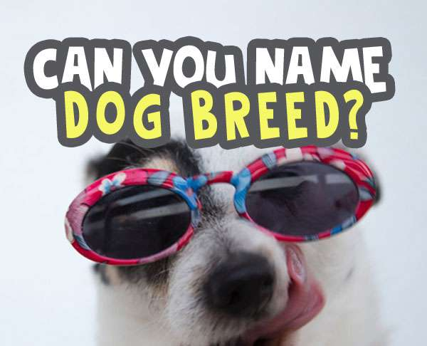 can you name the dog breed quiz answers featured image