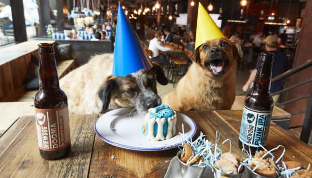 dog at party funny image