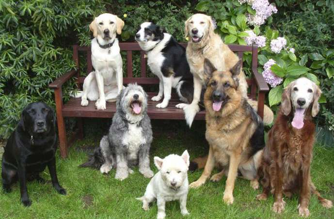 family-dog-friends-wag-tails