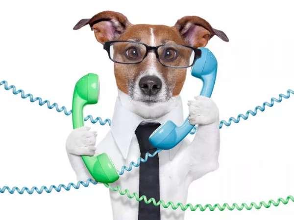 funny dog phoning image