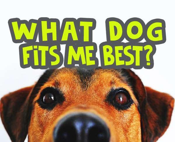 what dog fits me best quiz image