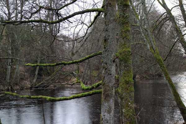 river troll trees jpg