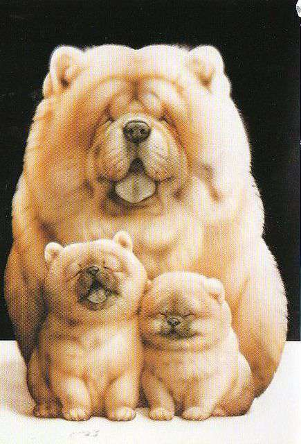 Chow-Chow family picture