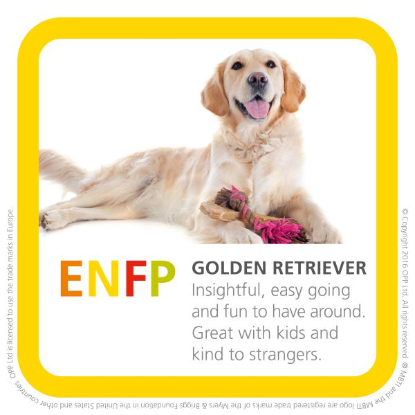 ENFP golden retriever breed of dog photo