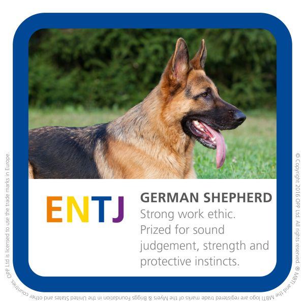 ENTJ german shepherd dog photo