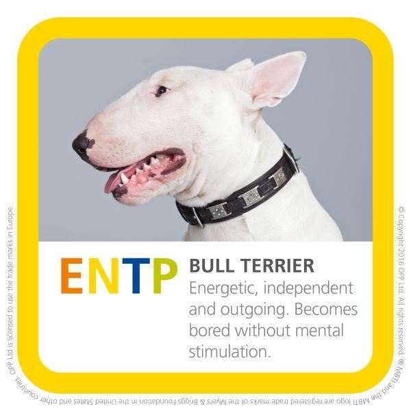 ENTP bull terrier dog image