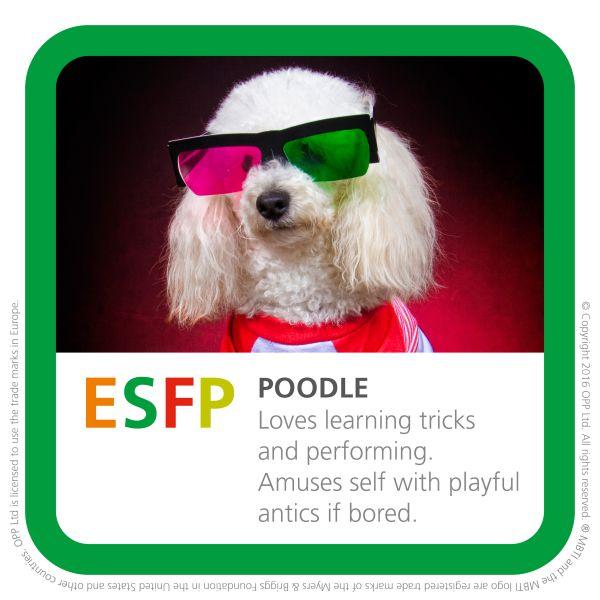 ESFP poodle dog breed pic