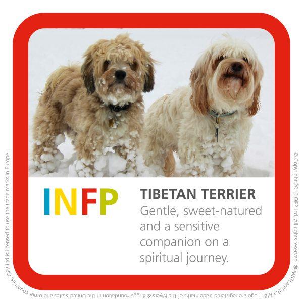INFP tibetan terrier dog breed img
