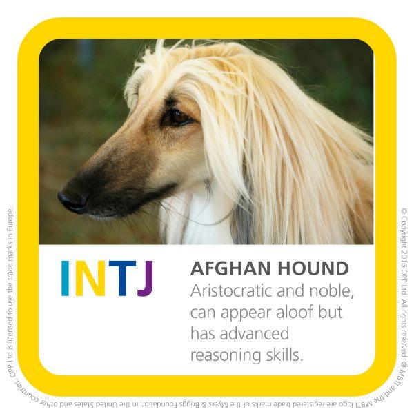 INTJ afghan hound dog breed img
