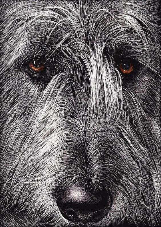 Irish Wolfhound face pic art