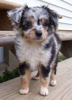 Mixed Breed dog breed photo