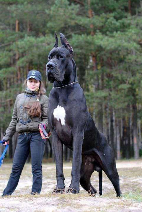 big giant dog picture