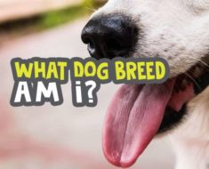 what-dog-breed-am-i-quiz featured image