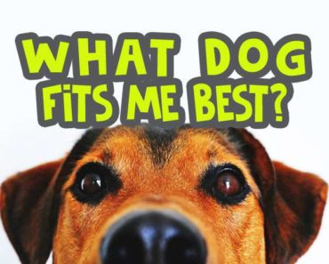 what-dog-fits-me-best-quiz image