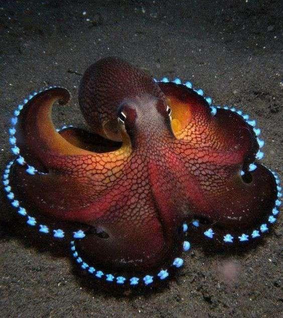 octopus spirit animal