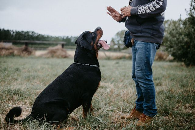 what animal are you quiz - photography-of-man-training-a-rottweiler