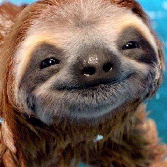 sloth spirit animal